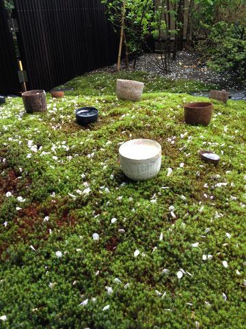 舞い散る花びら、しのつく雨、二階堂明弘さんの器インスタレーション