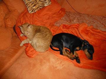 """Bella mit """"Freundin"""" beim gemeinsamen  Mittagsschläfchen."""