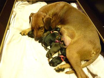 30.09.2010, Mama Onnie mit ihren Welpen, kurz nach der Geburt, mitten in der Nacht !!!