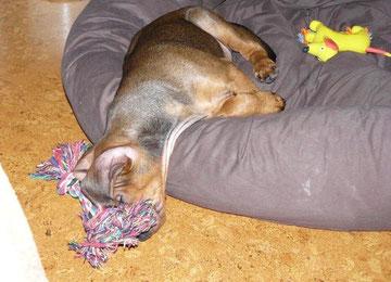 So schläft Bojo am liebsten !!