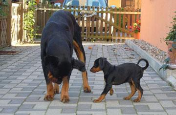 """Fini mit ihrem großen """"Bruder"""" Spike ;-))"""