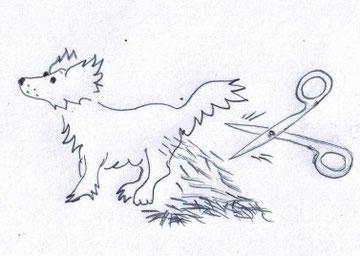 Kresba: Alena Walterová