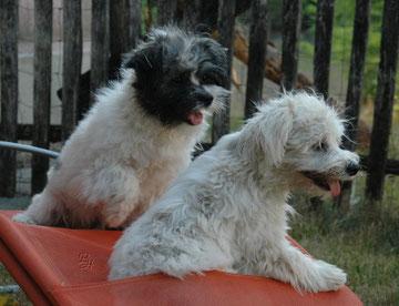 Crisu & Emma, ein unzertrennliches Paar
