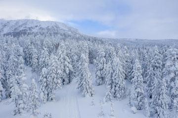 冬の旭岳 天女が原