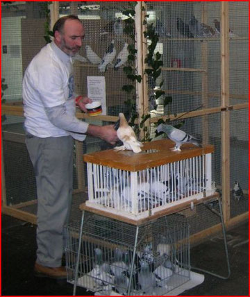 Ein Spezialist in der Halle mit freifliegenden Tauben