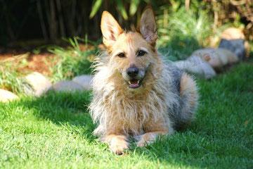 """Ein Hund namens """"Fussel"""""""