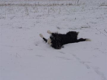 Luna, das Huhn, wälzt sich auf Ginger's Ball ;-)