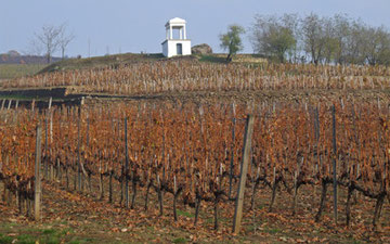 トカイ村のワイン畑
