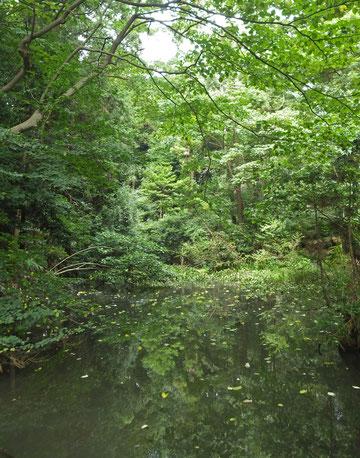 水の森公園
