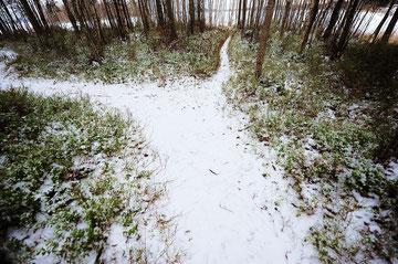 いやでも歩きたくなる。-15℃はおだやかな気温。