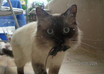 Aiko findet Mäuse toll, frisst sie aber nicht...