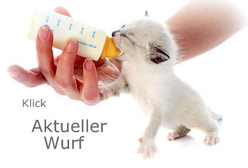 Kitten mit Flasche, Bildquelle: © cynoclub - Fotolia.com
