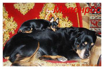 Лиза с Хильдой отдыхают-2010г.