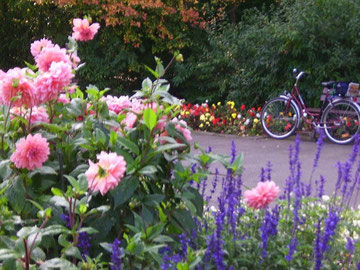 Radlerrast zwischen Sommerblumen ...