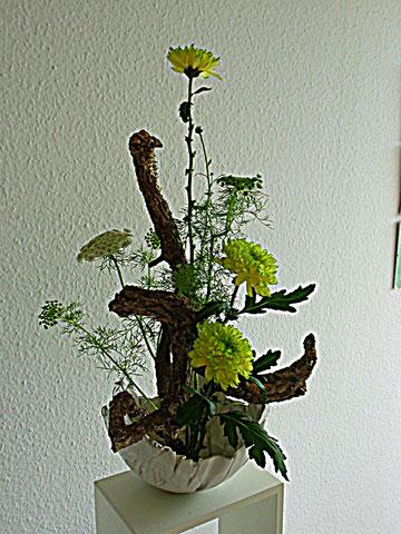 Korkeiche mit Chrysanthemen