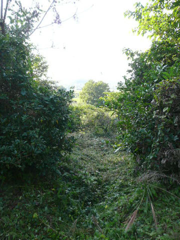 果樹園の風景
