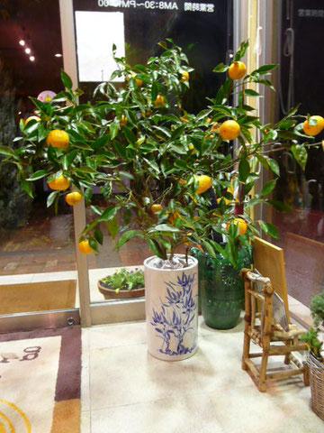 カフェ・グラート入り口の柚子