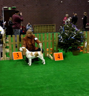 Internationale Dog Show Glogow (PL) Apricot Candy Gebrauchshundeklasse Excellent 3