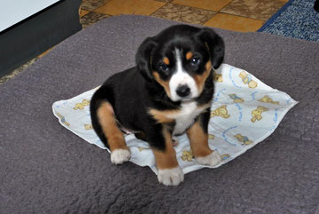 Kaja 5 Wochen alt