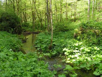 Lebensraum Laub-Mischwald
