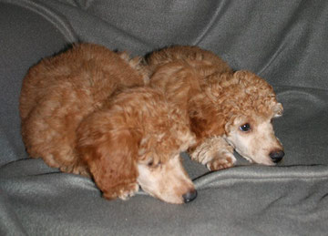 Charly und Bruder Aramis