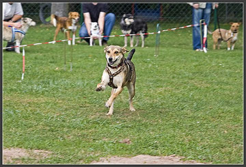 Hunderennen am BrunoPet-Tag 2009