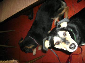 Unter dem Tisch, Lilly-Fee und Rex