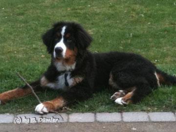 Cosmo - 5 Monate alt :-)