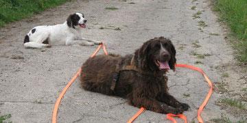 Notfallhund Kennie, der inzwischen ein gutes Zuhause gefunden hat.