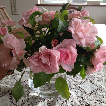 香りはないですが、よく咲くローゼンドルフシュパリスホープ