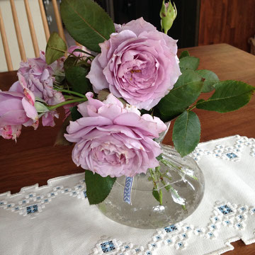 ノヴァーリス。この花も丈夫です。次から次へと咲きます。香りもよいです。