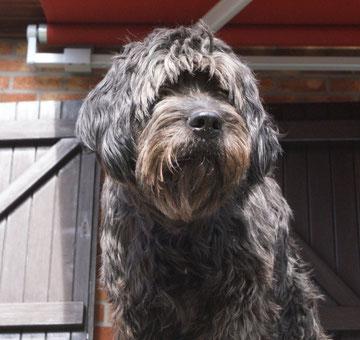 Leeloo die Chefin und die Gründerin der Amazing Agilitydogs :-)
