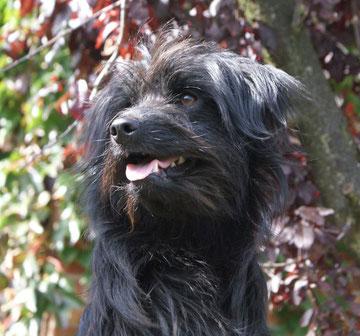 Newt October 2010