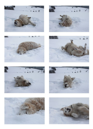 Lieblingsbeschäftigung: im Schnee wälzen - favorite activity: wallowing in the snow