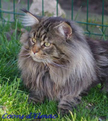 Cliquez sur la photo du chat pour accéder à sa description.