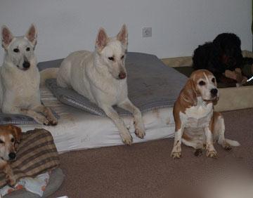 Hunde-Silvester-Party ;-)