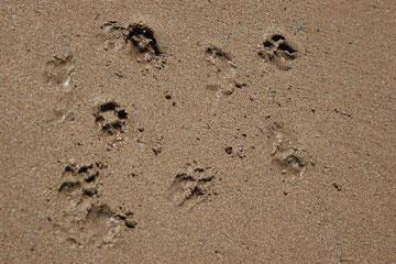 Ladys Spuren im Sand