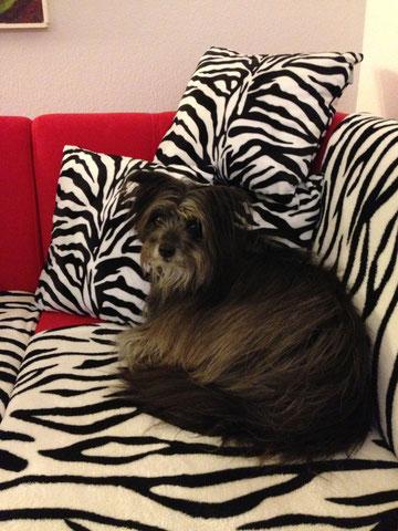 Lady genervt auf Sofa