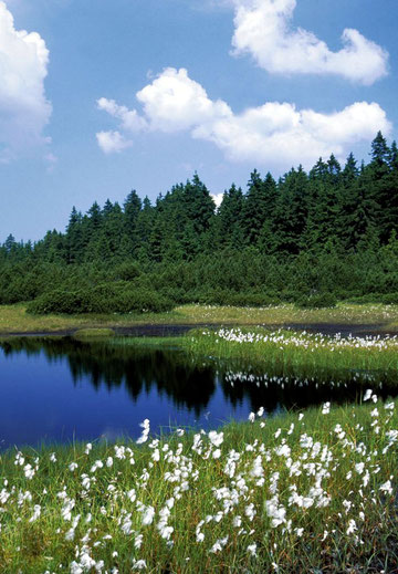 Moor in Tschechien