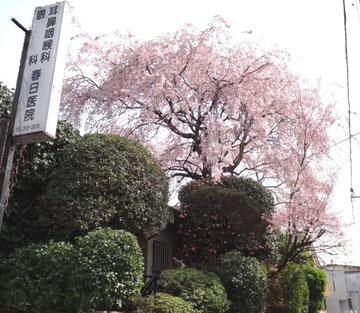 2012/4/10 撮影