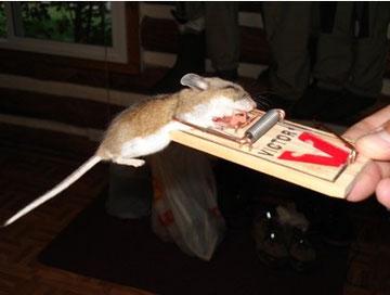 Il topolino sacrificato