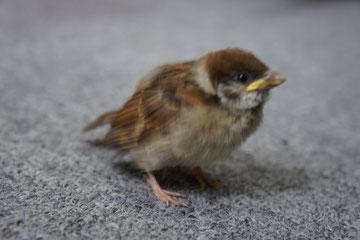 旅立つ前のチュン太郎 去年の画像 コウノトリと鳥つながりw