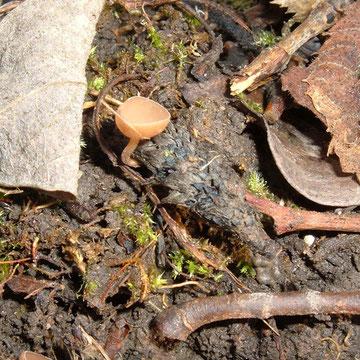 """.... um ihn zu finden nur etwas das Laub unter """"Kätzchenweiden """" (Salix)  beiseite räumen"""