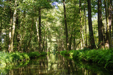 Ein Spreewaldfließ