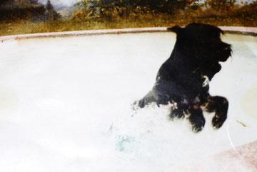 """Eines von ihren Hunden, vermutlich mit Namen """"Tasso"""" (C)  Nina"""