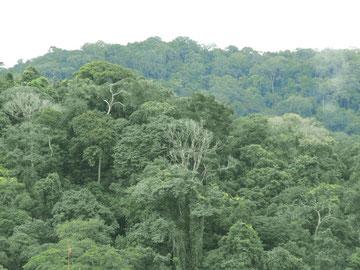 Vue de la forêt du gabon