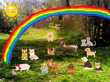 病気でくるしんでいた動物や、年をとって弱っていた動物も、ここにくると健康になり若々しさをとりもどします。けがをした動物やからだが不自由だった動物も、すっかり元気になり、じょうぶなからだをとりもどします。元気いっぱいだったころのすがたのように...    虹の橋より