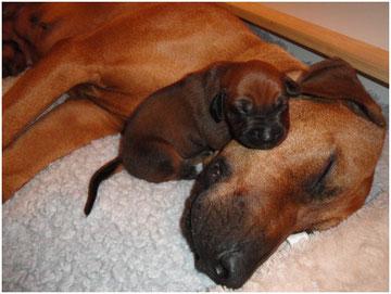 Ibo Irungo nutzt Mamas Kopf als Kissen