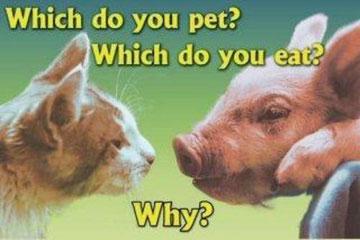 Alle Tiere haben Gefühle und empfinden SCHMERZ!