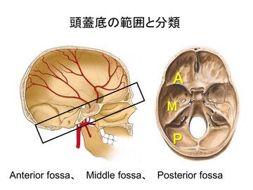 頭蓋底の範囲と分類